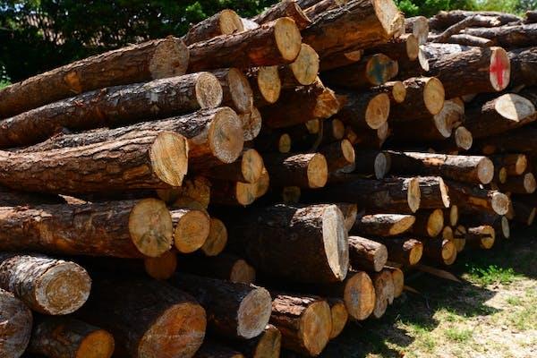 ウッドショックとは?木材の高騰が進む?