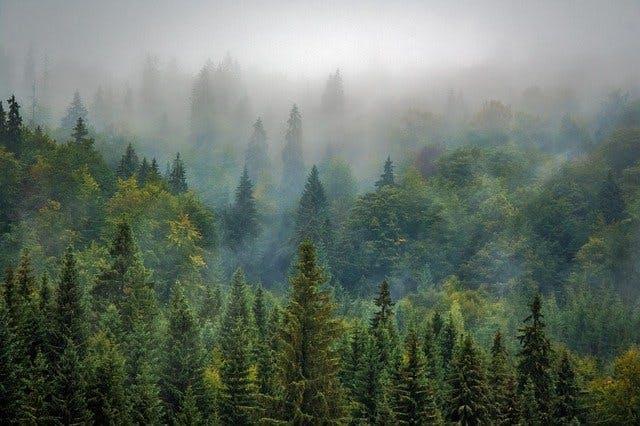 木材 チェックポイント 針葉樹 広葉樹